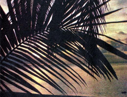 Фото №1 - Пряные ветры Сейшел