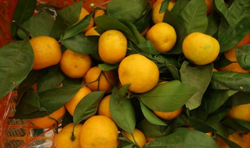 Фото №1 - Врач рассказала, почему реакцию на мандарины не всегда правильно называть аллергией