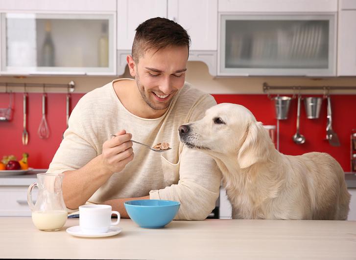 Фото №1 - Собаки способны понимать намерения человека