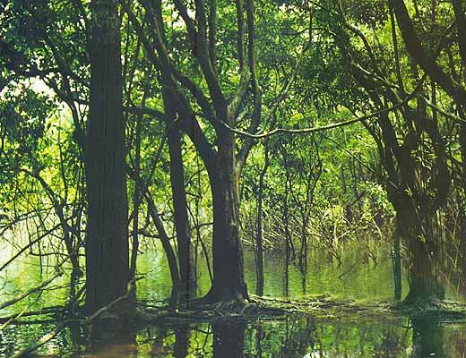 Фото №1 - Бог велик — а лес больше. Часть I