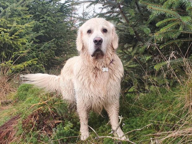 Фото №8 - Если собака без поводка: 15 фото песиков до и после прогулки