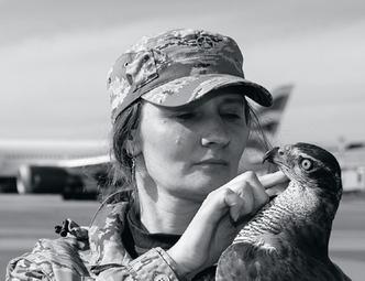 Фото №2 - Авиационные орнитологи: ястреб спасает самолеты