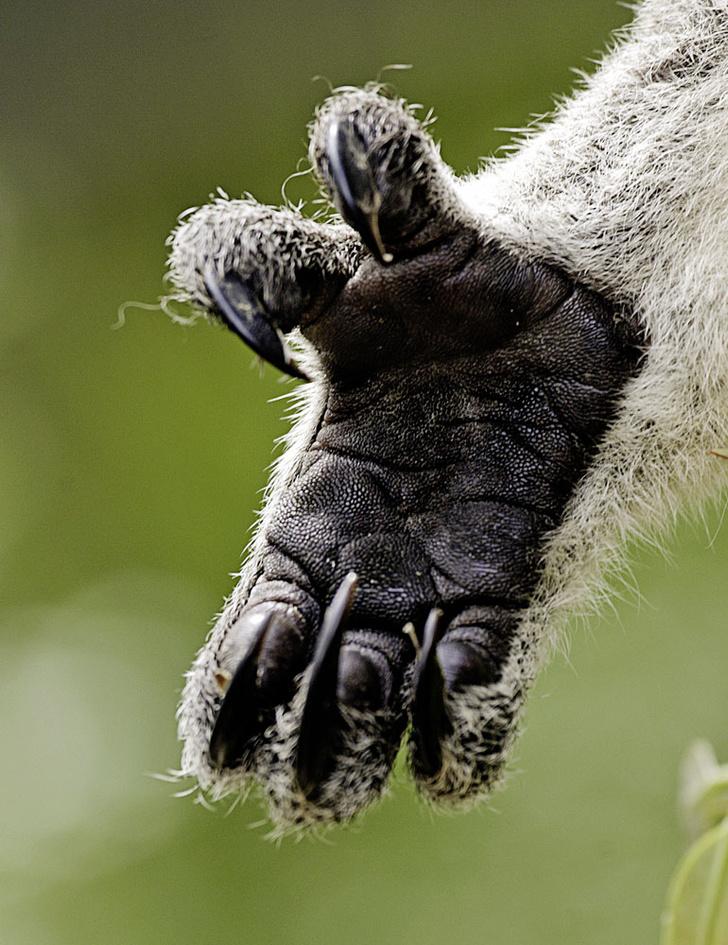 Фото №3 - Зоология: Рабы желудка