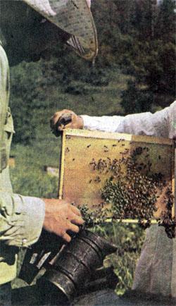 Фото №5 - «Это еще не настоящий мед…»