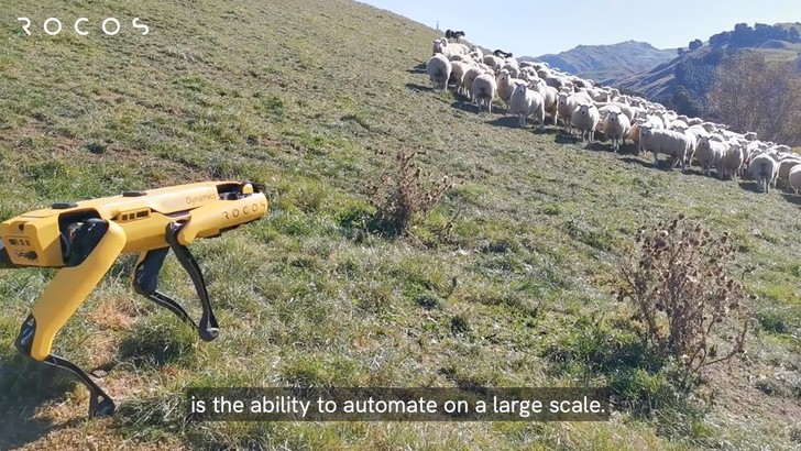 Фото №1 - Робопса Spot научили пасти овец (видео)