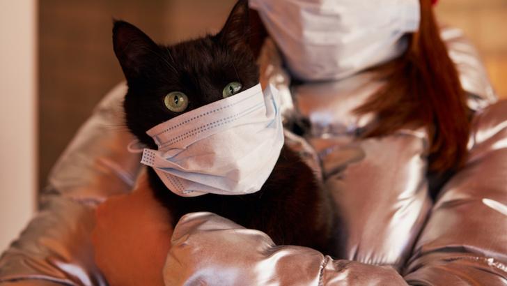 Фото №1 - Китайские ветеринары нашли антитела к коронавирусу у 15% кошек в Ухане