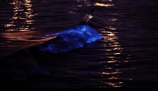 Фото №1 - Как выглядит сёрфинг на флуоресцентных волнах (видео)