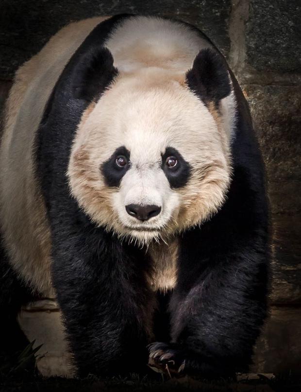 Фото №4 - Фотограф часами выжидал животных ради серии снимков, на которых они смотрят тебе прямо в глаза