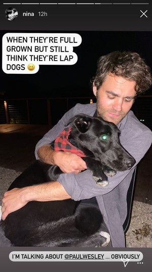 Фото №1 - Милота дня: Нина Добрев и Пол Уэсли познакомили своих собак