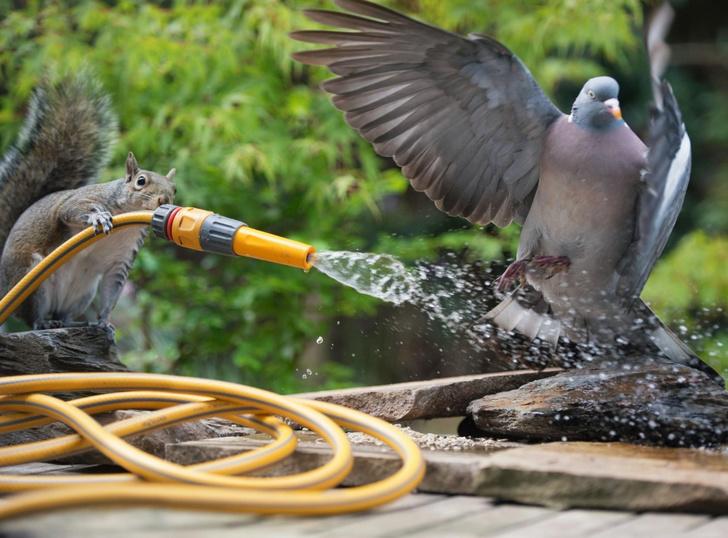 Фото №1 - Водная атака
