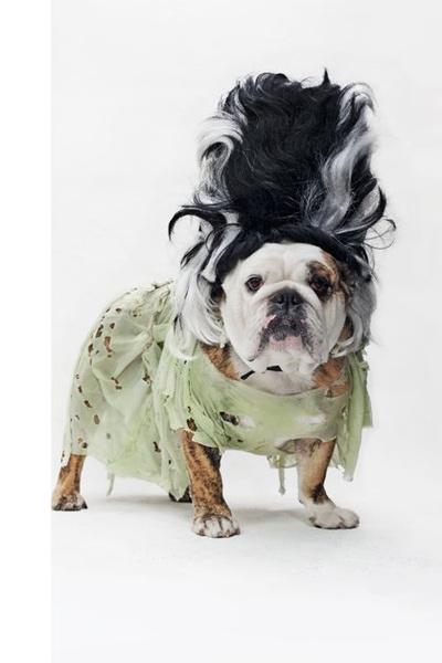 Фото №12 - Фотоподборка недели: собаки, которые уже готовы к Хэллоуину