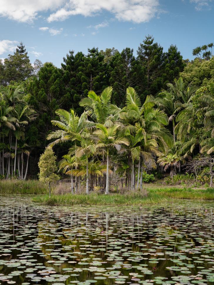 Фото №6 - Тропический сад в Австралии