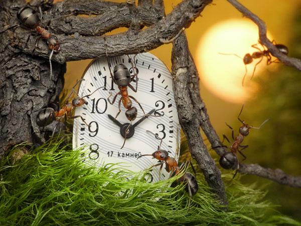 Фото №1 - Неоконченная пьеса для зауральских часов