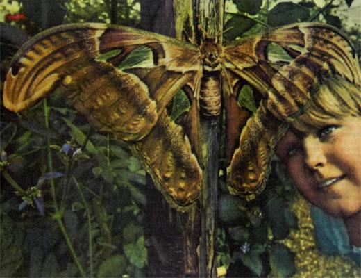 Фото №1 - Дом для бабочки