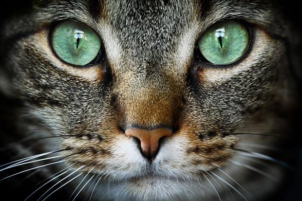 Фото №1 - Почему кошка медленно моргает, когда смотрит на тебя?