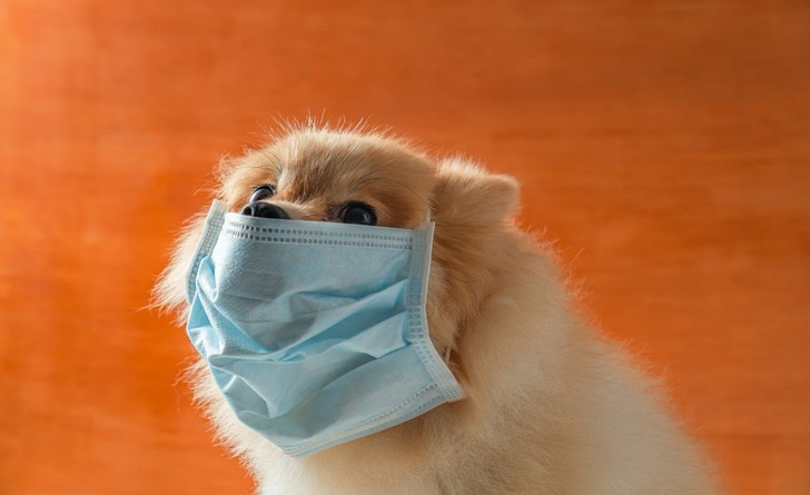 Фото №1 - ВОЗ объявила о пандемии COVID-19