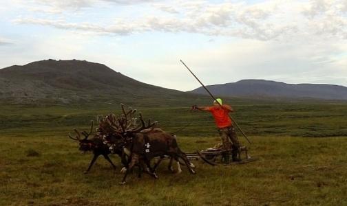 Фото №1 - В Гринпис назвали главную причину вспышки сибирской язвы на Ямале