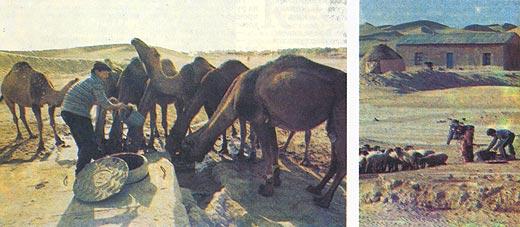 Фото №2 - У колодца в пустыни