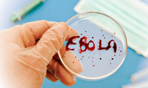 Фото №1 - Официальное число жертв лихорадки Эбола перевалило за 2000 человек