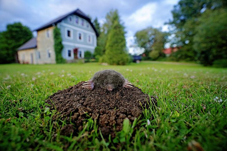 Фото №3 - Зоология: подземная изоляция