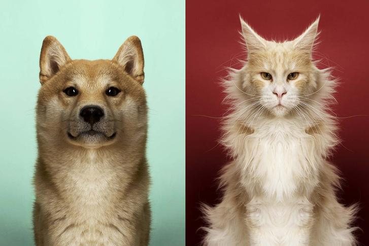 Фото №1 - Фотогалерея недели: симметричные животные