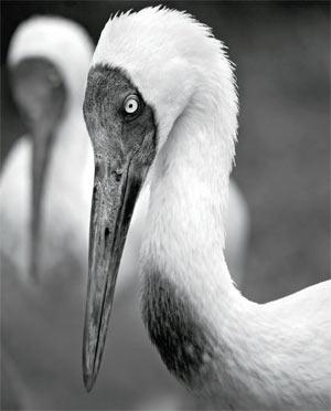 Фото №1 - Злые птички