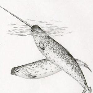 Фото №1 - Чили запретила охоту на китов