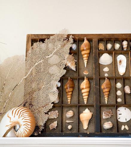 декор из морских ракушек