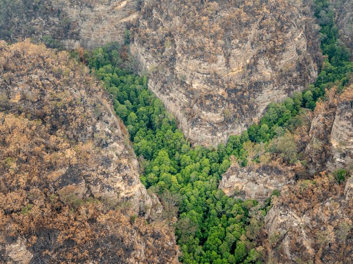 Фото №1 - Австралийские пожарные спасли рощу с доисторическими деревьями