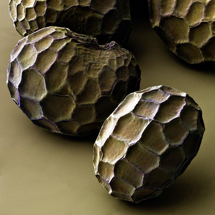 Фото №1 - Суть вещей: черные росинки