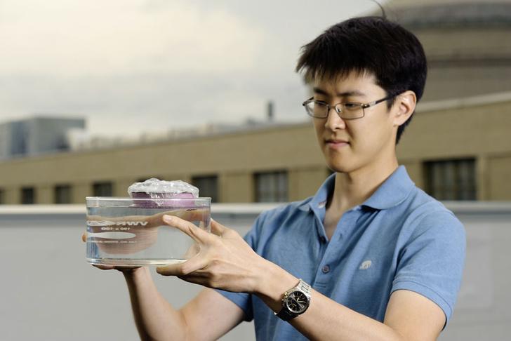 Фото №1 - Прозрачные мыши, губка под пузырьками и другие новые открытия