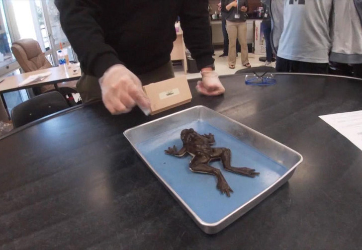 Фото №1 - Флоридские школьники первыми в мире начали препарировать на уроках синтетических лягушек (фото и видео)