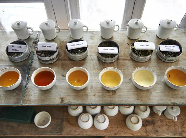 Фото №3 - Как полезный чай становится вредным для здоровья