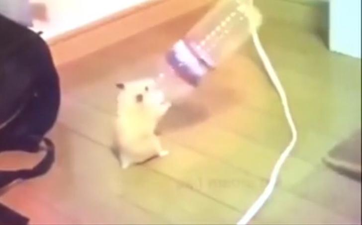 Фото №1 - Танцующий хомяк с бутылкой стал звездой Интернета (зажигательное видео)