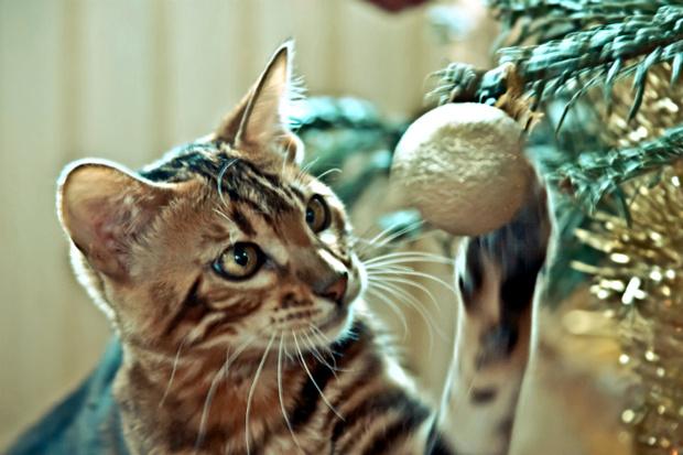 Фото №1 - Битва века: Котики против новогодних елок