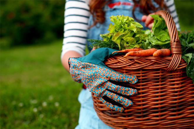 Фото №1 - Инструкция: как защитить растения от болезней