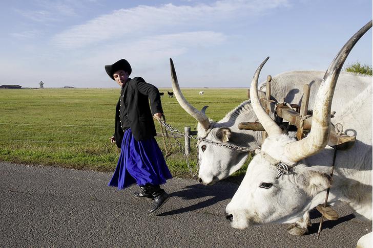 Фото №4 - Местные жители: пастушья воля