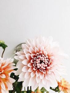 Фото №6 - Тест: Выбери цветок, и мы угадаем, какого цвета у тебя глаза