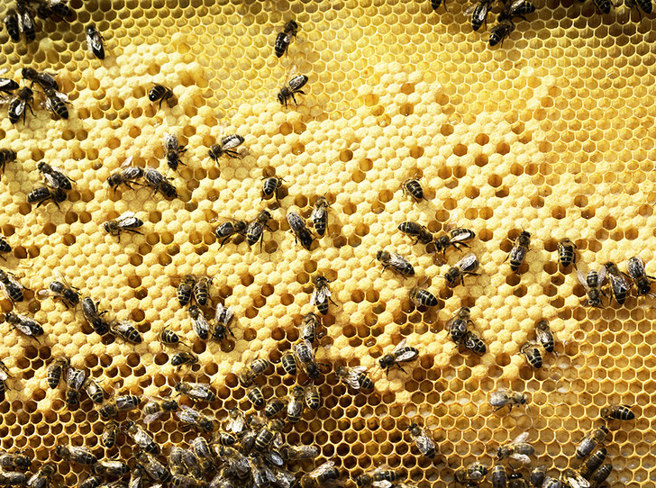 Фото №1 - Пчела с эффектом anti-age