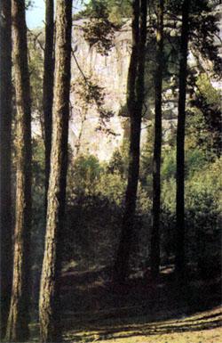 Фото №3 - Цвета столетий