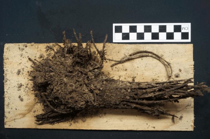 Фото №1 - Археологи нашли букет, которому почти 2000 лет