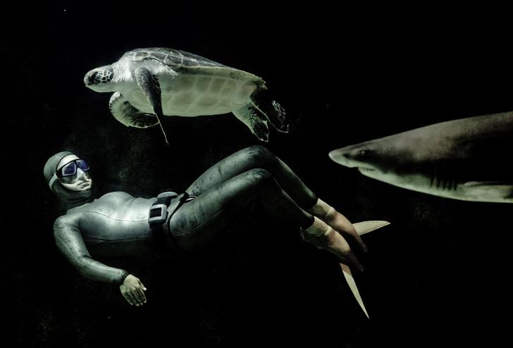 Фото №3 - Тише едешь— дольше будешь: долголетие и другие загадки гигантских черепах