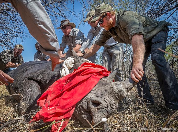 Фото №3 - Принц Гарри уехал от Меган Маркл к носорогам