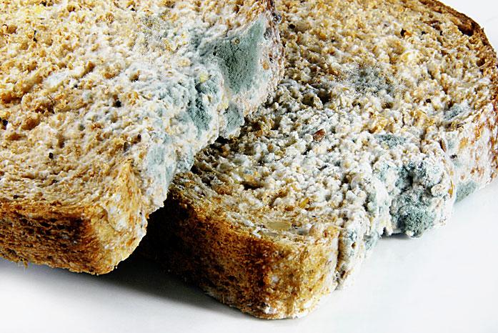 Фото №2 - Хлеба и зрелищ!