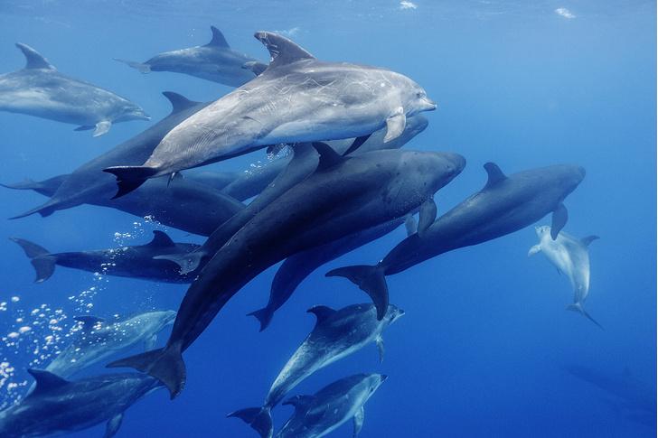 Фото №2 - Зоология: дружественные виды