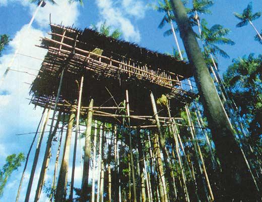 Фото №4 - Диалог с живущими на деревьях