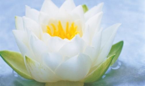 Фото №1 - Для акции помощи больным детям «Белый цветок» нужны волонтеры