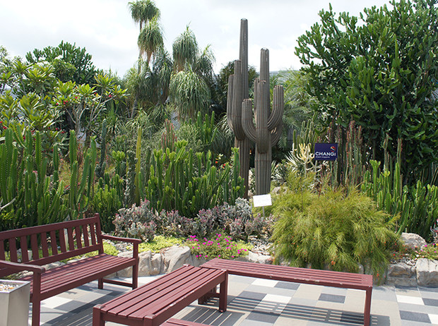 Фото №6 - Не выходя из аэропорта: 5 ботанических садов в Чанги (Сингапур)