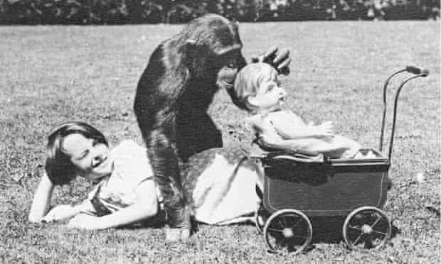 Джун Моттерсхед и шимпанзе Мери в Честерском зоопарке