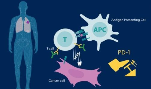 Фото №1 - Нобелевскую премию по медицине присудили за открытие в области терапии рака